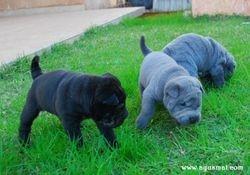 Black & Blue males