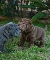Blue girl & Choco