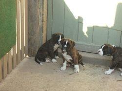 Charley, Harley and Travis