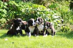Etties pups born 18-08-2008