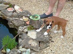 Puppy Poppy 2005