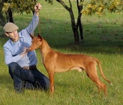 Australian Champion Birkhall Badru By Shimitoki