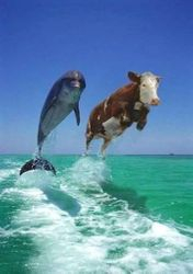 believe it or not, cows can jump!