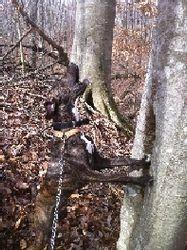 Hatchet treed