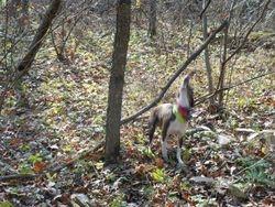 Rebel's Autumn squirrel hunt