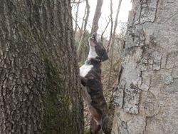 Gambler treed in winter 2011