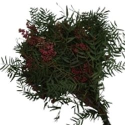 Pepperberry_Bulk_Greens_Hanging