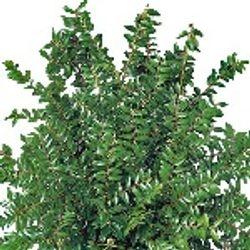 Huckleberry_Fresh_Greens