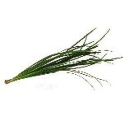 Lilly_Grass_Greenery_