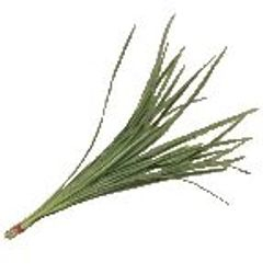 Lilly_Grass_Variegated_Greenery_