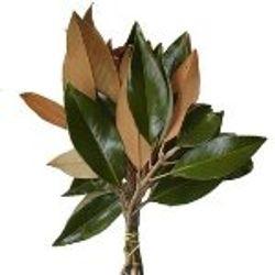 Magnolia_Tips_Greenery