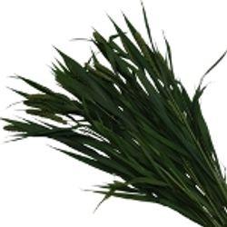 Millet_Fresh_Greens