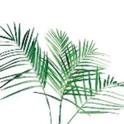 Treepee_Fresh_Greenery