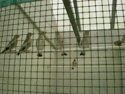 Nest pas uitgevlogen wildkleur putters