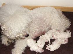 Nana vauvojensa kanssa