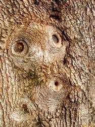 OooooLaLa.......A Real Tree Sprite