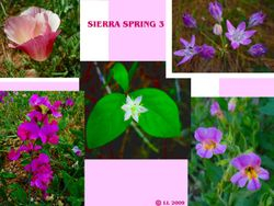 Images of Spring 3