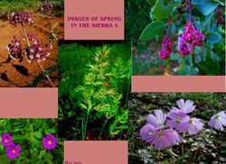 Images of Spring 4