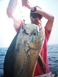 37 lb Dolphin