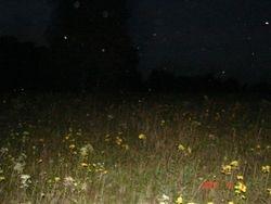 Wheatfields, Gettysburg, Pa. 9/2007