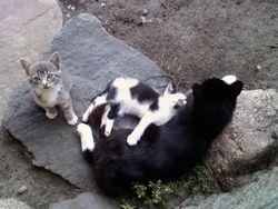 Sally's kittens