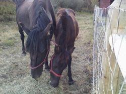 Willa and Zeb (foal)