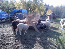 The Fat Ewes