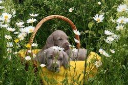 E-puppies