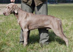 Wellieson Eazac 2008