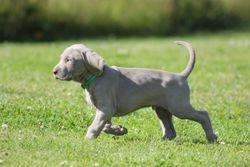 Green 6 weeks old