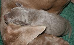 Boy puppy 090522