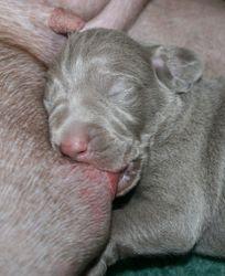 090523 dog puppy