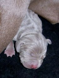 Two days old