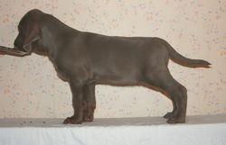Basco 8 weeks old