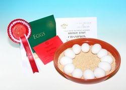 Best Eggs