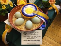Reserve Eggs & Best Plate Waterfowl
