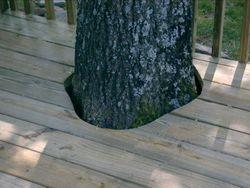 Cheshire Deck Detail