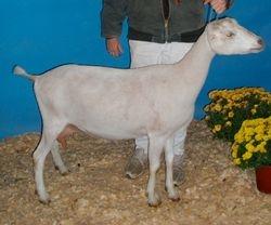2009 Arkansas State Fair