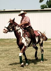 Luis Bogardus on his paint stallion.