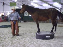 First time this horse steps on the pedestal
