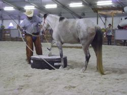 Assisting the horse to accept the pedestal