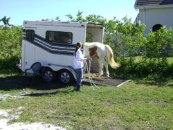 Effortless trailering with horse and owner empowered with confidence and knowledge.