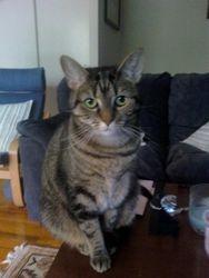 AMANDA'S CAT--MOLLIE JEAN