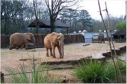 ELEPHANTS WAKING