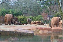 ELEPHANTS LEAVING THE WATERING HOLE