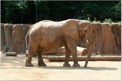 ELEPHANT AFTER A BATH