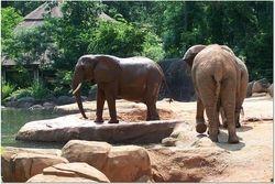 TWO ELEPHANTS WAITING TO BATH