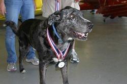 Cowboy - Aerobatic dog and big winner