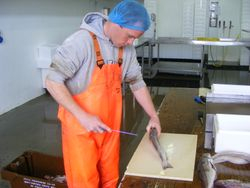 Three week filleting course at Foyle Fishermens Co-op
