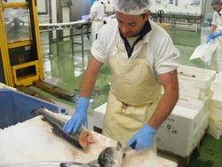 ISPG Connemara, filleting course